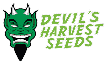 Grey Area - Devil's Harvest Seeds